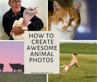 How to Create Awesome Animal Photos